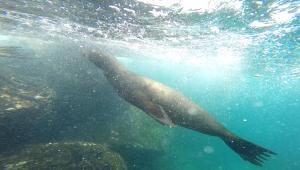 Sea Lion Pic2